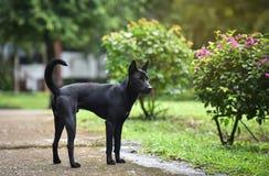Ευτυχές μαύρο σκυλί Στοκ φωτογραφίες με δικαίωμα ελεύθερης χρήσης