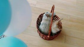 Ευτυχές Πάσχα, λαγουδάκι σε ένα καλάθι απόθεμα βίντεο