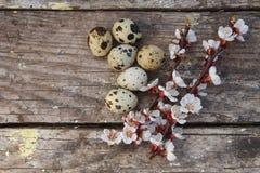 Ευτυχές Πάσχα με τα λουλούδια και τα αυγά ορτυκιών Στοκ φωτογραφία με δικαίωμα ελεύθερης χρήσης