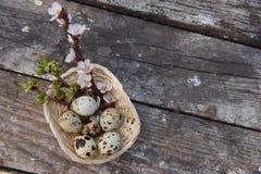 Ευτυχές Πάσχα με τα λουλούδια και τα αυγά ορτυκιών Στοκ εικόνες με δικαίωμα ελεύθερης χρήσης