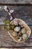 Ευτυχές Πάσχα με τα λουλούδια και τα αυγά ορτυκιών Στοκ Φωτογραφία