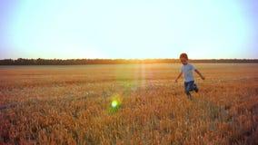 Ευτυχές παιδί που τρέχει σε έναν χρυσό τομέα του σίτου στο ηλιοβασίλεμα Εύθυμο παιχνίδι αγοριών χαμόγελου στη φύση το καλοκαίρι ε φιλμ μικρού μήκους