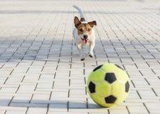 Ευτυχές παιχνίδι σκυλιών με μια σφαίρα στο πάρκο Στοκ φωτογραφία με δικαίωμα ελεύθερης χρήσης
