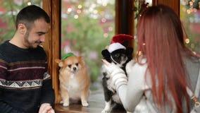 ευτυχές πορτρέτο ζευγών &a Έχουν πολλή διασκέδαση φορώντας τα καπέλα Santa στα σκυλιά Cutie απομονωμένη Χριστούγεννα διάθεση τρία απόθεμα βίντεο