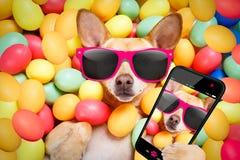 Ευτυχές σκυλί Πάσχας με τα αυγά selfie στοκ φωτογραφία με δικαίωμα ελεύθερης χρήσης