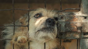 Ευτυχές σκυλί σε ένα κλουβί απόθεμα βίντεο