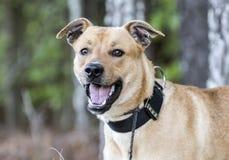 Ευτυχές σκυλί φυλής μιγμάτων mutt με το μαύρο περιλαίμιο στοκ φωτογραφίες με δικαίωμα ελεύθερης χρήσης