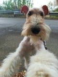 Ευτυχές σκυλί! στοκ εικόνα με δικαίωμα ελεύθερης χρήσης