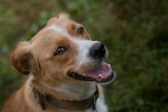 Ευτυχές σκυλί η αδελφή μου Στοκ Εικόνες