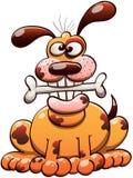 Ευτυχές σκυλί που μασά ένα κόκκαλο και ένα χαμόγελο Στοκ φωτογραφία με δικαίωμα ελεύθερης χρήσης