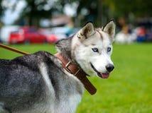Ευτυχές σκυλί στο λιβάδι Στοκ εικόνα με δικαίωμα ελεύθερης χρήσης