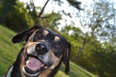 Ευτυχές σκυλί Στοκ εικόνες με δικαίωμα ελεύθερης χρήσης