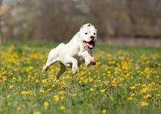 Ευτυχές σκυλί Στοκ φωτογραφία με δικαίωμα ελεύθερης χρήσης