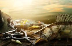 Ευτυχές υπόβαθρο αλιείας  Αλιεύοντας εξοπλισμός και τρόπαιο zander Στοκ Φωτογραφία