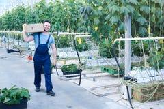 Ευτυχές φέρνοντας κιβώτιο αγροτών των αγγουριών Στοκ Εικόνα