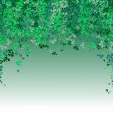 Ευτυχές φεστιβάλ ημέρας Αγίου Πάτρικ ` s Ιρλανδικός εορτασμός Πράσινα φύλλα τριφυλλιών τριφυλλιού στο υπόβαθρο απομονώσεων για τη στοκ φωτογραφίες