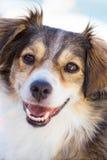 ευτυχές χαμόγελο σκυλιών στοκ εικόνα