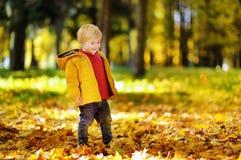 Ευτυχές χαριτωμένο αγόρι μικρών παιδιών που έχει τη διασκέδαση με τα φύλλα φθινοπώρου Στοκ Φωτογραφίες