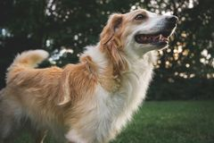 Ευτυχές χαριτωμένο σκυλί Στοκ εικόνα με δικαίωμα ελεύθερης χρήσης