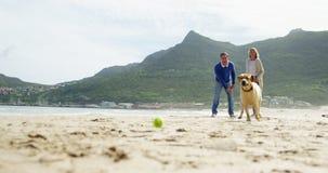 Ευτυχές ώριμο παιχνίδι ζευγών με το σκυλί στην παραλία απόθεμα βίντεο