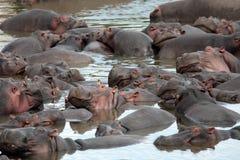 Ευτυχές Hippopotamus Στοκ φωτογραφία με δικαίωμα ελεύθερης χρήσης