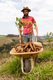 Ευτυχής αγρότης που παρουσιάζει προϊόντα μανιόκας του μια ηλιόλουστη ημέρα Στοκ Φωτογραφίες