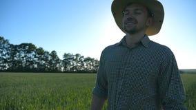 Ευτυχής αρσενικός αγρότης στο καπέλο που περπατά πέρα από τον πράσινο τομέα σίτου και που απολαμβάνει τη φύση Νεαρός άνδρας που π απόθεμα βίντεο