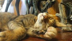 Ευτυχής γάτα ύπνου Στοκ εικόνα με δικαίωμα ελεύθερης χρήσης
