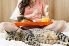 Ευτυχής γυναίκα που έχει το πρόγευμα στην κρεβατοκάμαρά της με τη γλυκιά γάτα Στοκ φωτογραφία με δικαίωμα ελεύθερης χρήσης