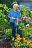 Ευτυχής ηλικιωμένη γυναίκα που καλλιεργεί τον κήπο λουλουδιών της στοκ φωτογραφίες με δικαίωμα ελεύθερης χρήσης