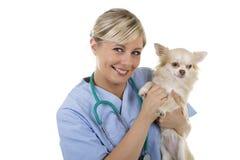 Ευτυχής θηλυκός κτηνίατρος με το σκυλί περιτυλίξεων Στοκ Εικόνες