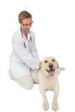 Ευτυχής κτηνίατρος που το κίτρινο σκυλί του Λαμπραντόρ Στοκ Φωτογραφία