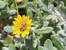 Ευτυχής μέλισσα στα λιβάδια στοκ εικόνα με δικαίωμα ελεύθερης χρήσης