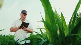 Ευτυχής μέσης ηλικίας αγρότης που εργάζεται σε έναν τομέα του καλαμποκιού Χρησιμοποιεί μια ψηφιακή ταμπλέτα, μια κατώτατη άποψη φιλμ μικρού μήκους
