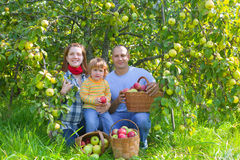 Ευτυχής οικογένεια με τη συγκομιδή μήλων Στοκ Φωτογραφίες