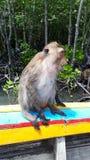 Ευτυχής πίθηκος στην Ταϊλάνδη Στοκ Εικόνες