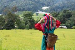Ευτυχής φυλή λόφων στο ζωηρόχρωμο φόρεμα κοστουμιών τομέων ρυζιού ορυζώνα στοκ φωτογραφία