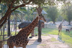 Ευτυχής φυσικός ζωολογικός κήπος ταξιδιού με σκοπό τις διακοπές Στοκ εικόνα με δικαίωμα ελεύθερης χρήσης