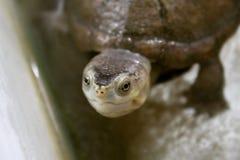 ευτυχής χελώνα στοκ φωτογραφία