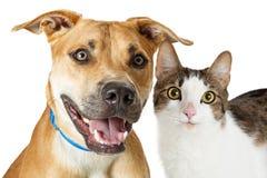Ευτυχή γάτα και σκυλί διασταύρωσης από κοινού Στοκ φωτογραφία με δικαίωμα ελεύθερης χρήσης
