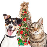 Ευτυχή γάτα και σκυλί με το χριστουγεννιάτικο δέντρο στοκ εικόνα