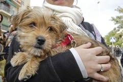 Ευτυχή σκυλιά SAN anton Στοκ φωτογραφίες με δικαίωμα ελεύθερης χρήσης