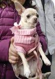 Ευτυχή σκυλιά SAN anton Στοκ εικόνα με δικαίωμα ελεύθερης χρήσης
