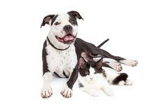 Ευτυχή σκυλί και γατάκι από κοινού Στοκ φωτογραφία με δικαίωμα ελεύθερης χρήσης