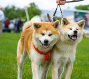 Ευτυχή σκυλιά στο λιβάδι Στοκ εικόνα με δικαίωμα ελεύθερης χρήσης