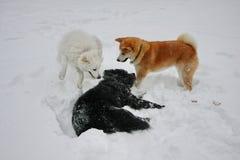 Ευτυχή σκυλιά στο χιόνι Στοκ Φωτογραφία