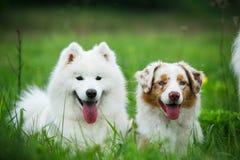 Ευτυχή σκυλιά φίλων Στοκ φωτογραφίες με δικαίωμα ελεύθερης χρήσης