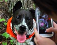 Ευτυχή χαμόγελα σκυλιών για το πορτρέτο κινητών τηλεφώνων στοκ εικόνες