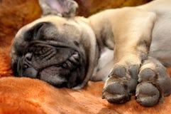 Ευτυχία ύπνου Στοκ φωτογραφία με δικαίωμα ελεύθερης χρήσης