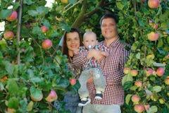Ευτυχείς γονείς με το παιδί στον κήπο μήλων Στοκ φωτογραφίες με δικαίωμα ελεύθερης χρήσης